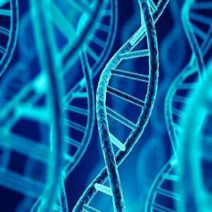 DNA و پیش بینی احتمال ابتلا به سرطان